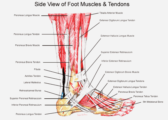 How Fit Are Your Feet?